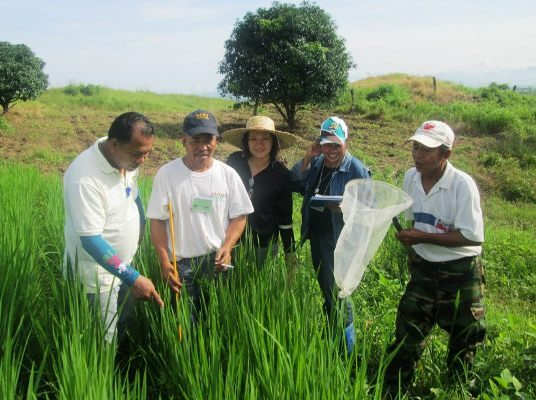 Farmers Field School on Palay Production, ipinapatupad ng DA Region 1