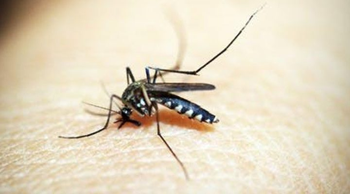 Metro Manila, lumampas na sa dengue alert threshold